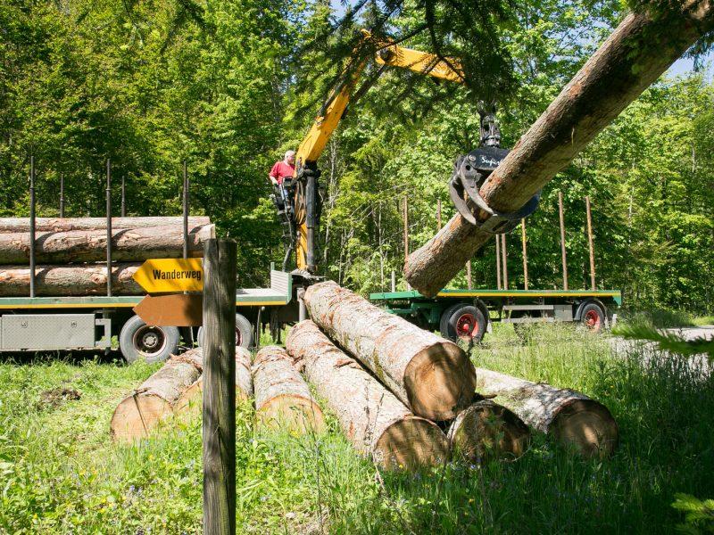 Bauholz aus dem lokalen Wald